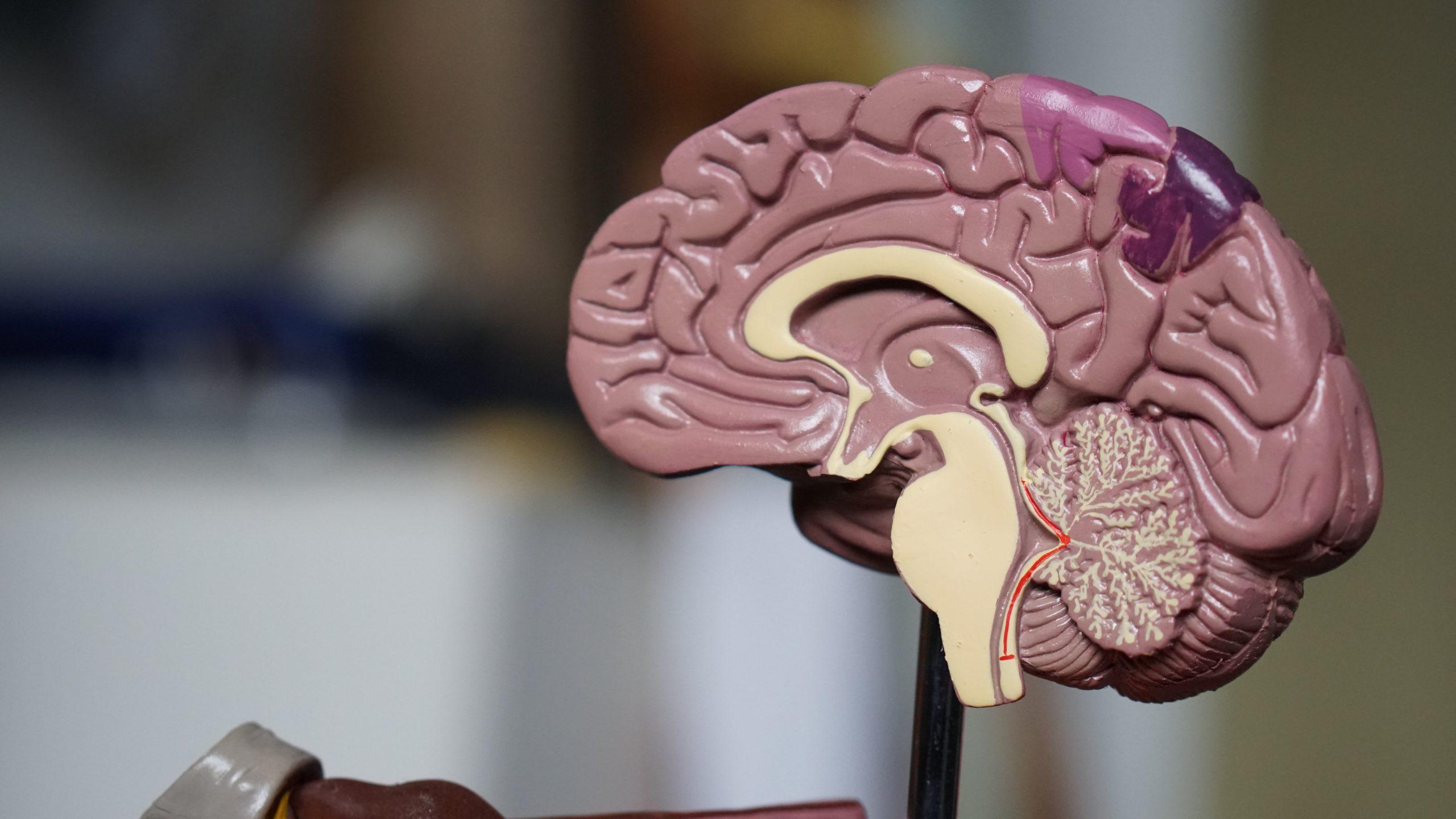 Improve Brain through NeuroEmpowerment